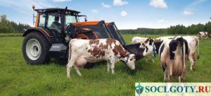 Субсидии для сельского хозяйства в 2020 году на развитие как получить