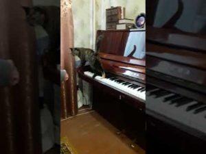 До скольки можно играть дома на пианино