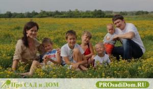 Земля многодетной семье новосибирск