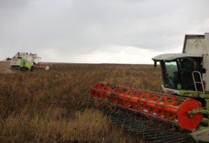 Как получить субсидию на фермерское хозяйство в 2020