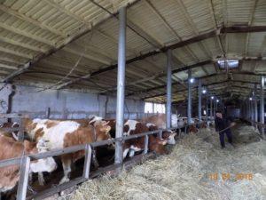 Как получить статус сельхозпроизводителя 2020
