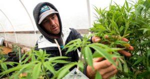 Ответственность за управление марихуаны рф 2020